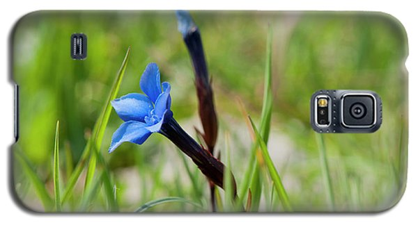 Irish Gentians Galaxy S5 Case