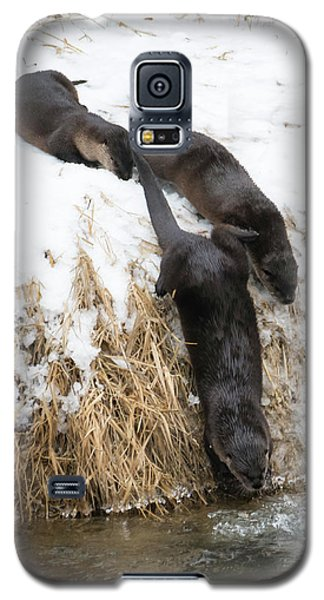 Otter Galaxy S5 Case - Is It Cold by Mike Dawson