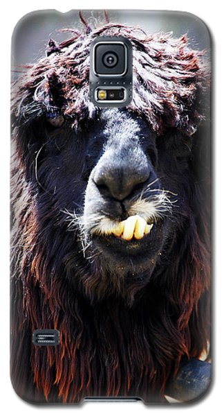 Galaxy S5 Case featuring the photograph Is Your Mama A Llama? by Anthony Jones