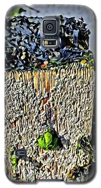 Isle Of Man Low Tide Galaxy S5 Case
