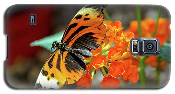 Ismenius Tiger Butterfly Galaxy S5 Case