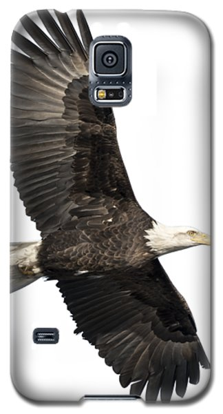 Isolated American Bald Eagle 2016-4 Galaxy S5 Case
