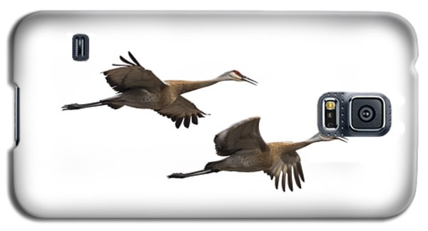 Isolated Sandhill Cranes 2016-1 Galaxy S5 Case