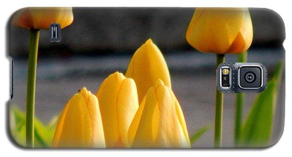 It Is Spring Galaxy S5 Case