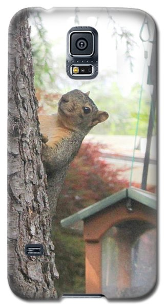 Galaxy S5 Case featuring the photograph It Was Not Me I Tell Yuh by Marie Neder
