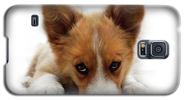It Wasn't Me Corgi Galaxy S5 Case