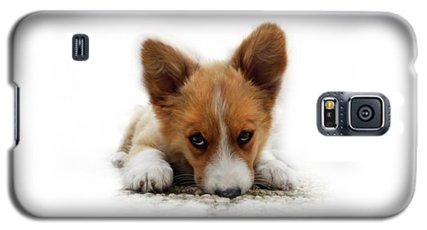 It Wasn't Me Corgi Galaxy S5 Case