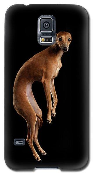 Dog Galaxy S5 Case - Italian Greyhound Dog Jumping, Hangs In Air, Looking Camera Isolated by Sergey Taran