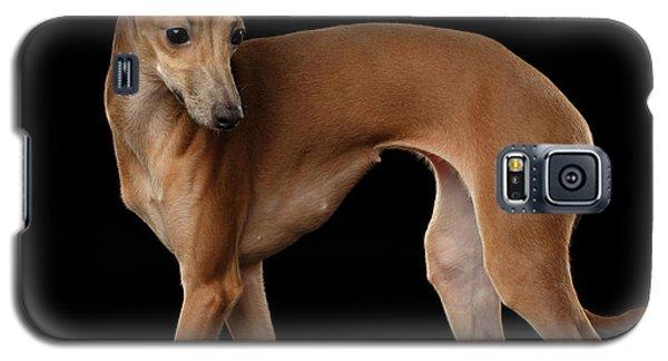 Dog Galaxy S5 Case - Italian Greyhound Dog Standing  Isolated by Sergey Taran