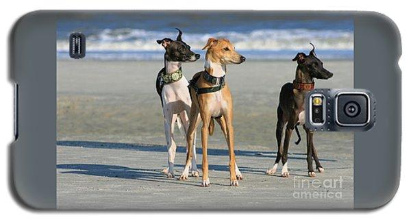 Italian Greyhounds On The Beach Galaxy S5 Case