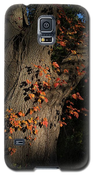 Ivy In The Fall Galaxy S5 Case