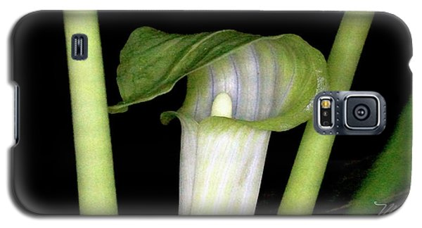 Jack In The Pulpit Galaxy S5 Case