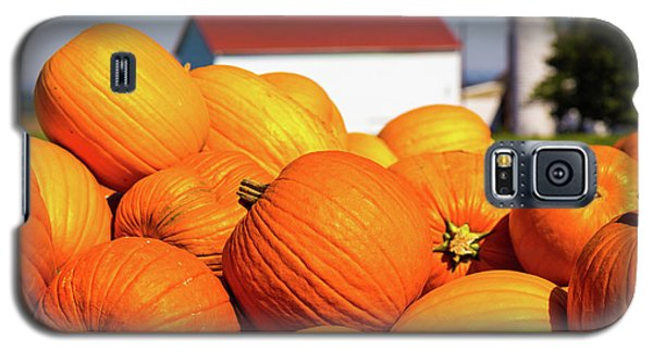 Jack-o-lantern Pumpkins At Farm Galaxy S5 Case