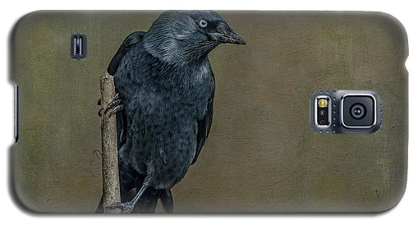 Jackdaw Galaxy S5 Case
