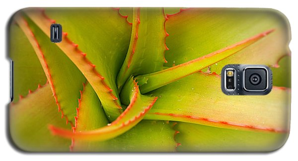 Jagged Aloe Galaxy S5 Case