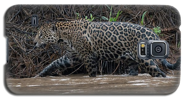 Galaxy S5 Case featuring the photograph Jaguar In River by Wade Aiken