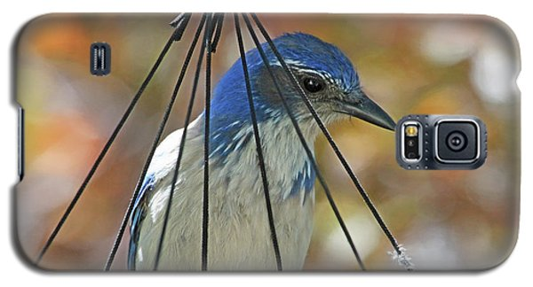 Bluejay Galaxy S5 Case - Jail Bird by Donna Kennedy