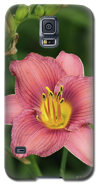 Jamaica Sunrise Daylily Galaxy S5 Case