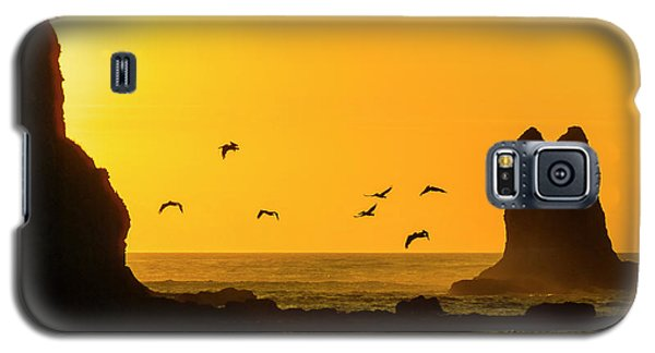 James Island And Pelicans Galaxy S5 Case