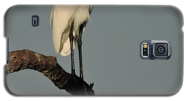 January Egret Galaxy S5 Case by Peg Toliver