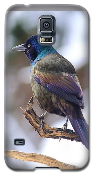 January Grackle Galaxy S5 Case