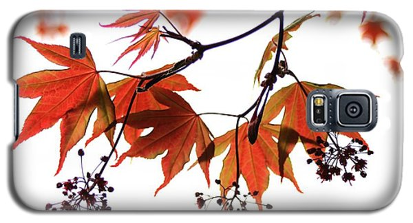 Japanese Maple 2011-2 Galaxy S5 Case
