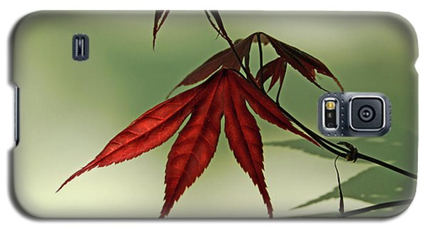Galaxy S5 Case featuring the photograph Japanese Maple Leaf by Ann Lauwers