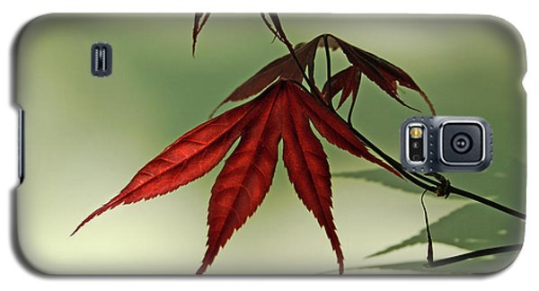 Japanese Maple Leaf Galaxy S5 Case by Ann Lauwers