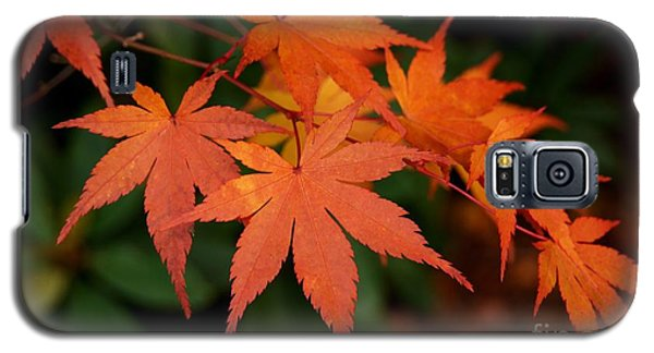 Japanese Maple Leaves Galaxy S5 Case