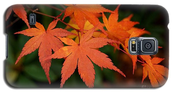 Japanese Maple Leaves Galaxy S5 Case by Patricia Strand