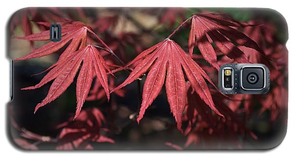 Japanese Maple Galaxy S5 Case by Mary Zeman