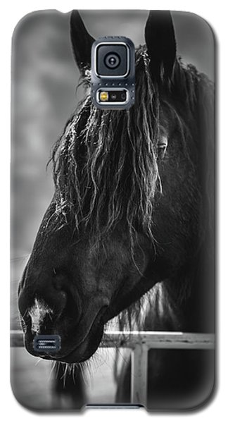 Galaxy S5 Case featuring the photograph Jay The Rasta Horse by Debby Herold