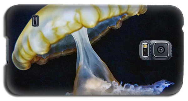 Jellyfish No. 1 Galaxy S5 Case by Alan Toepfer