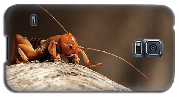 Galaxy S5 Case featuring the photograph Jerusalem Cricket On Textured Log by Max Allen