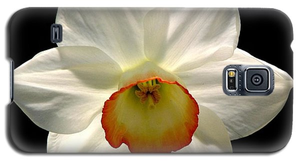 Jonquil 1 Galaxy S5 Case by Rose Santuci-Sofranko