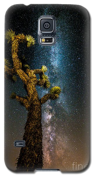 Joshua Tree And Milky Way Galaxy S5 Case