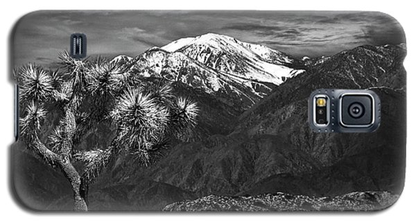 Galaxy S5 Case featuring the photograph Joshua Tree At Keys View In Black And White by Randall Nyhof