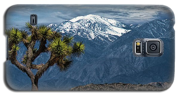 Galaxy S5 Case featuring the photograph Joshua Tree At Keys View In Joshua Park National Park by Randall Nyhof
