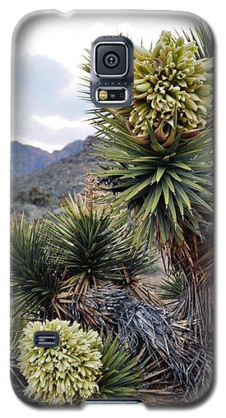 Joshua Tree Bloom Rainbow Mountain Galaxy S5 Case