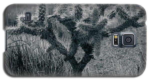 Joshua Tree Cactus Galaxy S5 Case