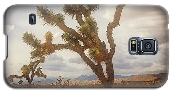Famous Artist Galaxy S5 Case - Joshua Tree. #photographer #photo by Alex Snay