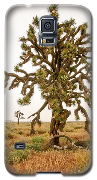 Joshua Trees In Desert Galaxy S5 Case