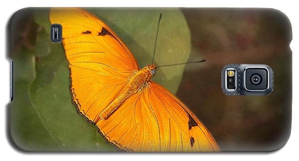 Julia Dryas Butterfly-2 Galaxy S5 Case