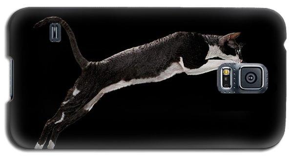Jumping Cornish Rex Cat Isolated On Black Galaxy S5 Case