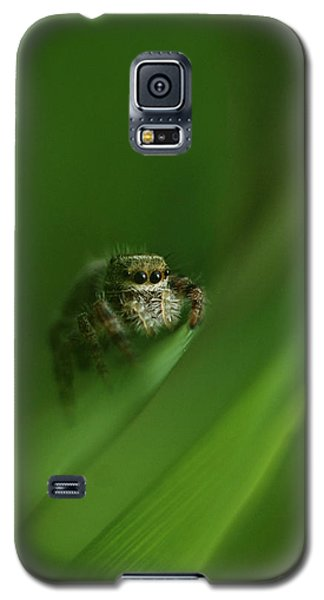 Jumping Spider Contemplating Life Galaxy S5 Case