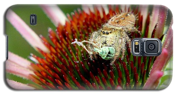 Jumping Spider With Green Weevil Snack Galaxy S5 Case