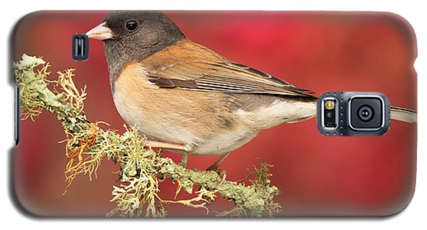 Galaxy S5 Case featuring the photograph Junco Against Peach Blossoms by Max Allen