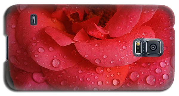 Galaxy S5 Case featuring the photograph June  Rose  by Colette V Hera  Guggenheim