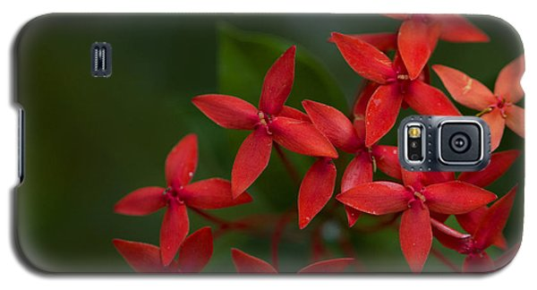 Jungle Geranium Galaxy S5 Case by Marlo Horne
