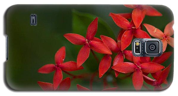 Jungle Geranium Galaxy S5 Case